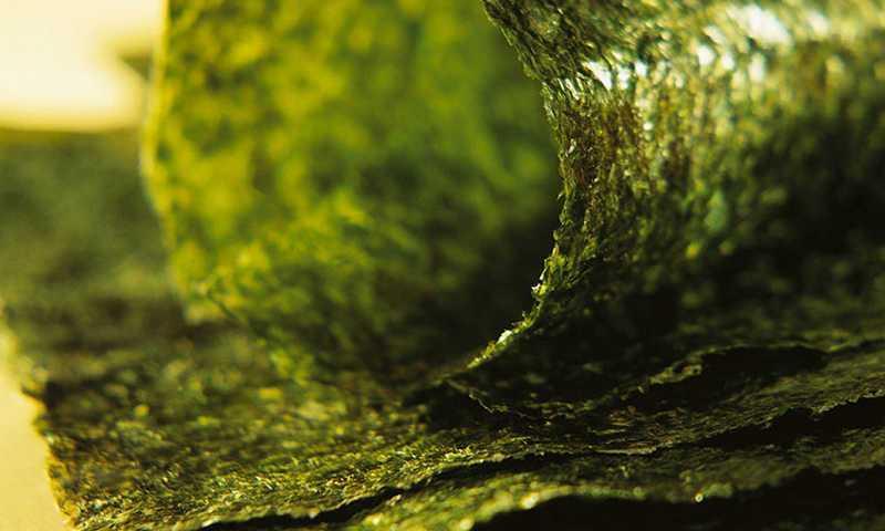 rumput laut jepang