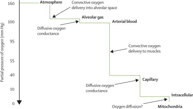 syrgas-luft-t-mitokondrie