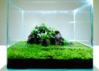 Druhy akváriových aquascapov