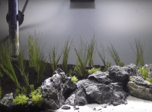 Iwagumi aquascape