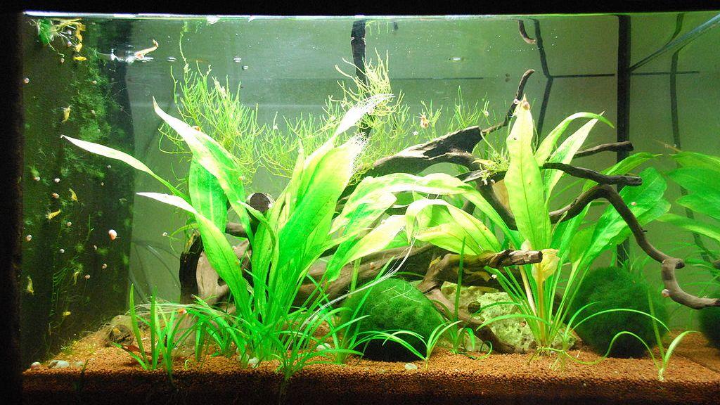 akvarium 60l foto