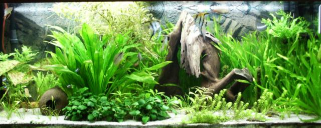 Akvarium 240L