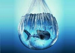 Аквариумная рыба под заказ