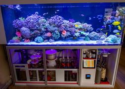 Морской аквариум на заказ