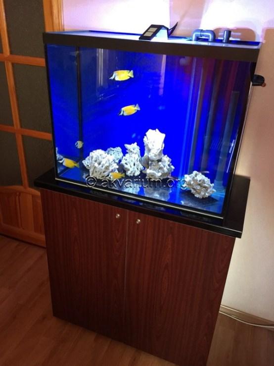 morskoy-akvarium-4.11