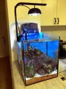 morskoy-akvarium-5.3