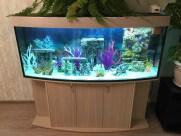 presnovodnyy-akvarium (4.8)