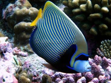 reef-fish-1