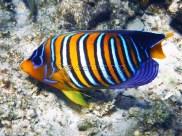reef-fish-2