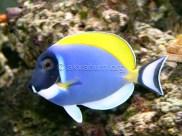 reef-fish-5