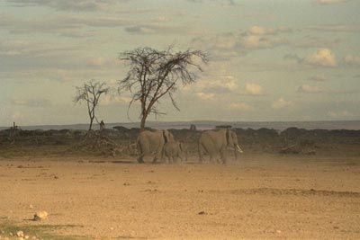 Paint Falling Wallpaper Elephant In The Savanna Create A Collage In Akvis Chameleon