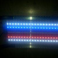 Paski LED jako oświetlenie akwarium?