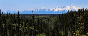 Alaskan Wildwood Ranch® | Alaskan Life Realty