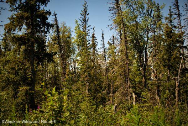 C17 Alaskan Wildwood Ranch®
