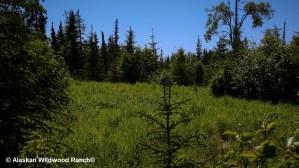 C2 Alaskan Wildwood Ranch® | Alaskan Life Realty