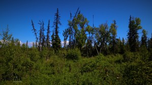 C28 Alaskan Wildwood Ranch®
