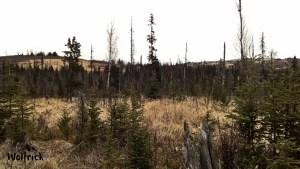 C32 Alaskan Wildwood Ranch®