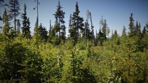 D18 Alaskan Wildwood Ranch®