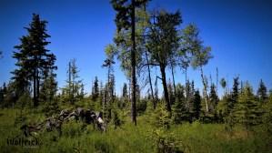 D23 Alaskan Wildwood Ranch®