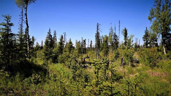 D23 Alaskan Wildwood Ranch®| ©Alaskan Life Realty