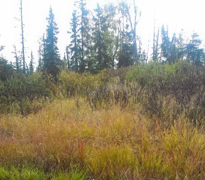 D26 Alaskan Wildwood Ranch®