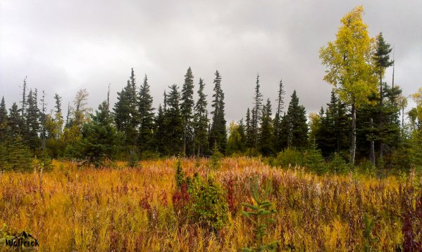 D26 Alaskan Wildwood Ranch®| ©Alaskan Life Realty