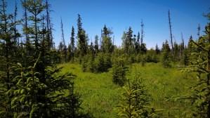 D28 Alaskan Wildwood Ranch®