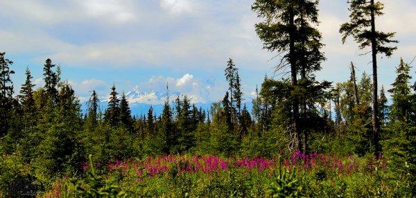 D28 Alaskan Wildwood Ranch®| ©Alaskan Life Realty