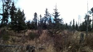 D3 Alaskan Wildwood Ranch®
