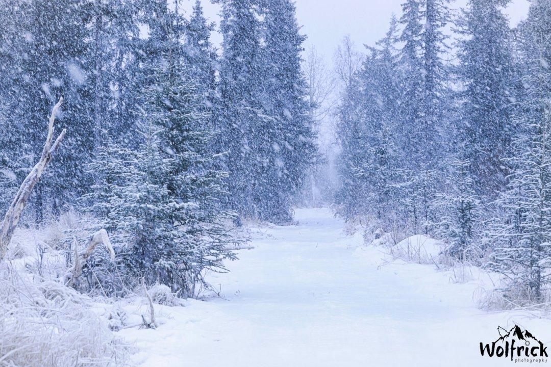 Winter at Alaskan Wildwood Ranch®