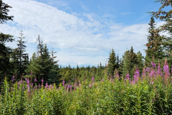 C13 Alaskan Wildwood Ranch®