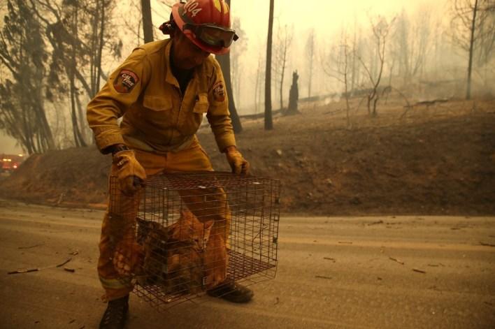 عنصر إطفاء ينقذ مجموعة قطط في ماليبو