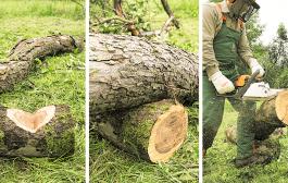شركة ازالة اشجار بالرياض 0503067654 قطع وتقليم الاشجار بارخص الاسعار