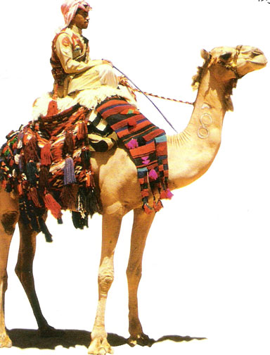 Al Hakawati Wadi Rum