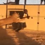 بالفيديو: أسد يهاجم رجل داخل قفص