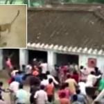 بالفيديو : قرية هندية تعيش يوم مرعب بسبب فهد