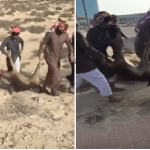 """بالفيديو: شباب يذبحون """"ظبي"""" خلف مبنى سكني بالدمام.. وسخط بين رواد التواصل: ملك لأحد المواطنين !"""