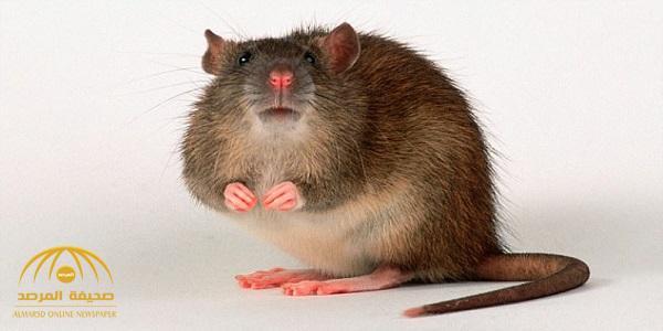 ثورة علمية.. علماء يصنعون قلبا بشريا من أعضاء الفئران