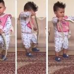 شاهد .. مواطن يترك طفل يلعب مع ثعبان حي .. و يطلب منه أمر غريب !
