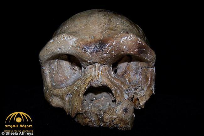 تعرف على بقايا جمجمة «دالي» التي قد تغير تاريخ تطور الإنسان كله – صور