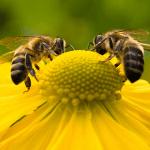 تعرف على عجائب سمّ النحل في علاج واحد من أكثر الأمراض خطورة على الإنسان