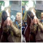 بالفيديو : شاهد ما حدث للحصان بعد إجباره على شرب الحشيش في فرح شعبي بمصر