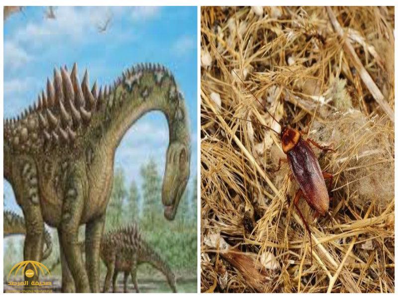 أيهما أقدم.. الصراصير أم الديناصورات؟
