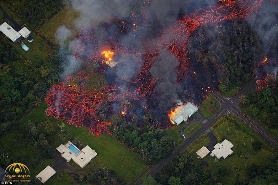 """""""هاواي"""" الحدائق 7880000045242-19.jpg"""