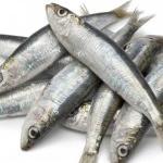 علماء يكتشفون السمكة الأكثر فائدة للإنسان!