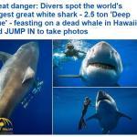 مشهد مثير  ..شاهد:  اثنان من الغواصين يلتقطان الصور الفوتوغرافية بجانب أكبر قرش أبيض في العالم!