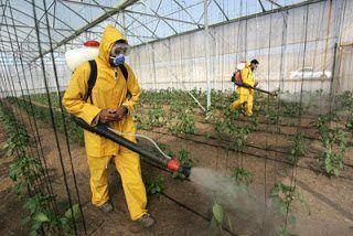 شركة رش مبيدات حشرية بالخرج