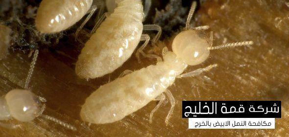 شركة مكافحة النمل الابيض بالخرج 0501515313