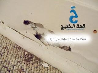 شركات مكافحة النمل الابيض بتبوك