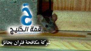 شركة مكافحة فئران بحائل 0533942974